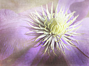 Margaret Hormann Bfa - Clematis