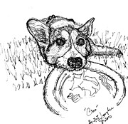 Corgi Drawings - Cleo by DJ Laughlin