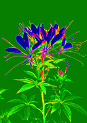 Computer Generated Flower Prints - Cleome gone abstract Print by Kim Galluzzo-Wozniak