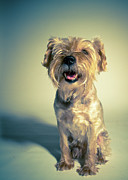 Full-length Portrait Prints - Cleveland Dog Print by Square Dog Photography