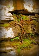 Challenging Prints - Cliff Growth Print by Cindy Wright