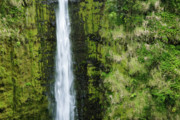 Charmian Vistaunet - Cliff of Akaka Falls