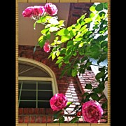 Floral Art - Climbing Roses by the Brick Porch Window by Anna Porter