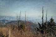 Gatlinburg Posters - Clingmans Dome Poster by Cheryl Davis