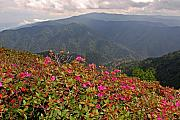 Gsmnp Photos - Clingmans Dome from Cliff Top by Alan Lenk