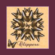 Brown Clipper Posters - Clipper Butterfly Pin Wheel Poster by Melissa A Benson