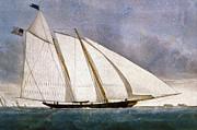 Clipper Yacht America Print by Granger