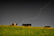 Farm Scenes Photos - Close Call by Emily Stauring