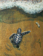 Baby Sea Turtle Paintings - Close by Jennifer Belote