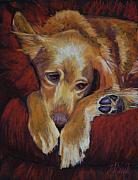 Sleeping Dog Pastels Prints - Close to Dreamland Print by Billie Colson