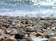 Seashell Metal Prints - Close Up From A Beach Metal Print by Romeo Reidl