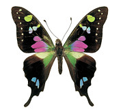 Grainy Prints - Close-up Of A Graphium Butterfly Print by Stockbyte