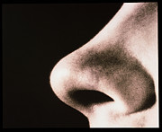 Nostril Framed Prints - Close-up Of A Human Nose (side View) Framed Print by Cristina Pedrazzini