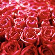 Red Flower Photos - Close-up Of A Mass Of Red Roses by Stockbyte