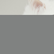 One Animal Posters - Close Up Of Cat Poster by Dhmig Photography