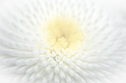 Close Focus Nature Scene Digital Art - Close Up of Flower in Soft Focus with Vignette 2 by Ed Churchill