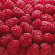 Y120817 Art - Close-up Of Freshly Picked Raspberries by Andrew Bret Wallis
