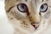 Domestic Animals Art - Close Up Of Kitten by Reiko Zoe T.
