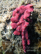 Under Water. Nature Posters - Close-up Of Live Sponge Poster by Ted Kinsman