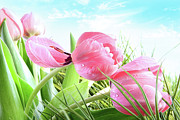 Easter Celebration Posters - Close-up of  Spring tulips  Poster by Sandra Cunningham
