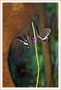 Colorful Pyrography Originals - Close Up View Of The Butterfly... by Genadi Tchoulak