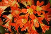 Monocots Photos - Close View Of A Cluster Of Flowers by Darlyne A. Murawski