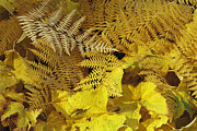 Physiology Art - Close View Of Ferns And Fallen Leaves by Marc Moritsch