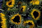 Vendors Prints - Close View Of Sunflowers In A Bundle Print by Todd Gipstein