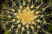 Succulents Prints - Close View Of The Spiked Flower Print by Todd Gipstein
