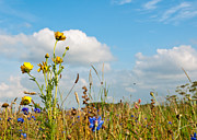Natuur Photos - Closeup of a field with sunny wildflowers by Ruud Morijn