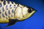 Aquariums Photos - Closeup Of A Fish by Steve Nagy