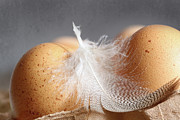 Sustainable Prints - Closeup of brown speckled eggs  Print by Sandra Cunningham