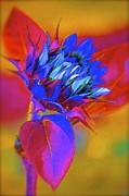 Colorful Sunflower Framed Prints - Closing My Eyes Framed Print by Gwyn Newcombe