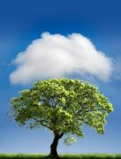 Tree. Oak Framed Prints - Cloud Cover Framed Print by Mal Bray