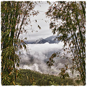 Gloomy Framed Prints - Cloud Covered Sky Through Bamboo Framed Print by Skip Nall