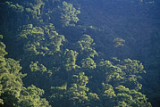 Andes Metal Prints - Cloud Forest Clings To Upper Amazon Metal Print by Gordon Wiltsie