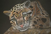 Leopard Pastels - Clouded Leopard by Stephanie L Carr