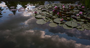 Water Lillies Prints - Clouded Pond Print by Mike Reid