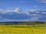 Alberta Foothills Landscape Framed Prints - Clouds and Canola Framed Print by Robert Karg