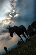 Mares Posters - Clouds and Equine Poster by Emily Stauring