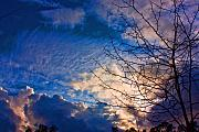 Bluesky Framed Prints - Clouds and Tree Framed Print by John Scholey