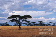 East Africa Prints - Clouds over the Masai Mara Print by Sandra Bronstein