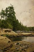 Marilyn Wilson - Cloudy Daydreams - Botanical Beach textured