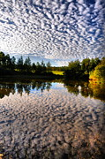 Water Scenes Prints - Cloudy Pond  Print by Emily Stauring