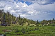 Sheep Originals - Cloudy Skys At Rocky Mountain Park Co by James Steele