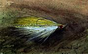 Fishing Paintings - Clouser Minnow by Sean Seal