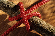 Clove Prints - Clove hitch knot on walnut branch Print by Sami Sarkis