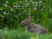 Clover Rabbit Print by Valerie Towles