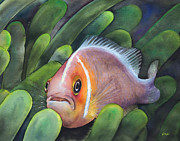 Nancy Pahl - Clown fish and Sea...