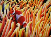 Fish Underwater Pastels - Clown Fish Hiding In Coral by Pravin  Sen
